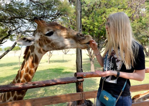 "A friendly ""native"" in Pretoria"