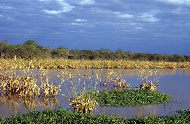Gran Chaco plain view