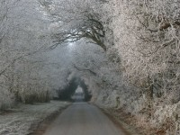 Winter scene, frozen trees by the road