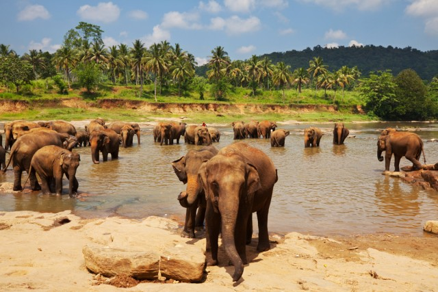 Sri Lanka with its friendly elephants and rich flora