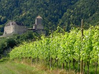 Vineyard and old fortress in South Tyrol