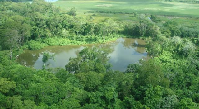 Belize jungle view