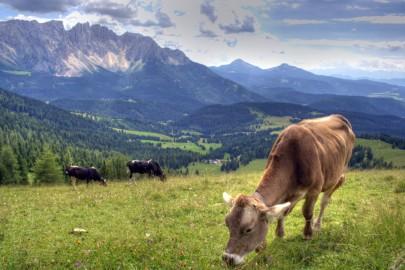 Rosengarten in the Dolomites