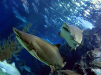 Sharks at Siam Ocean World
