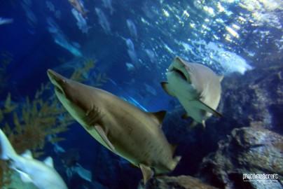 Sharks at Siam Ocean World
