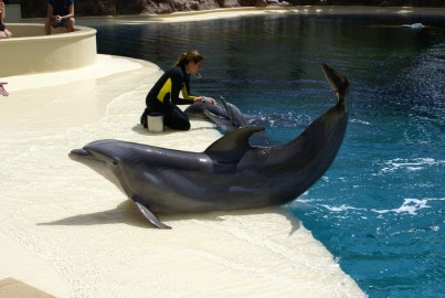 Dolphin at Siegfried & Roy's