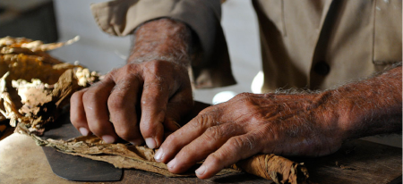 Cigar making on Alejadro Robaina plantation