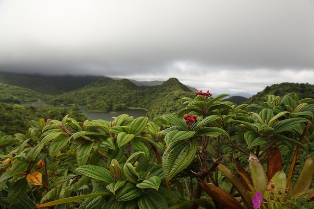 Dominica has a unique flora and this is an example at Freshwater Lake ©Liam Quinn/flickr
