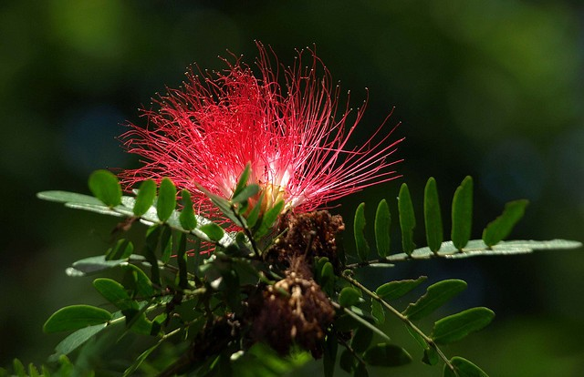 One of Dominica's common tropical flower ©Ken Hircock/flickr