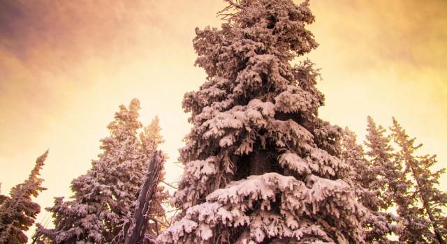 Trees at Blue Sky Basin