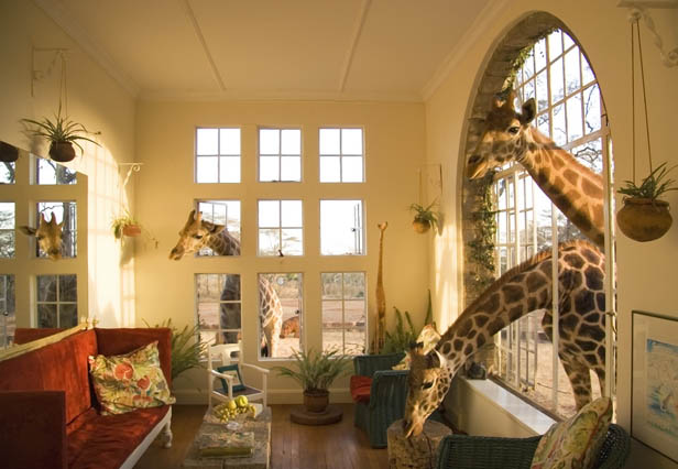 http://www.travelgrove.com/blog/wp-content/uploads/giraffe_manor_01.jpg