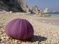 Der Sonne entgegen, den Urlaub genießen, Schnäppchen machen.: , Italy