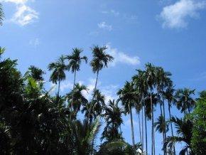 Palau Travel Guide